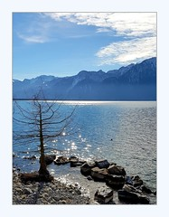 tree on the beach (overthemoon) Tags: switzerland suisse schweiz svizzera romandie vaud montreux lake léman lakegeneva mountains alps water blue sunny winter frame sparkly