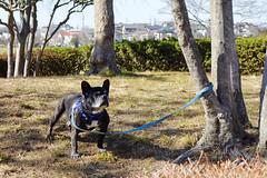 untitled (t-miki) Tags: dog kawaguchi saitama 犬 川口 埼玉