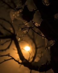 Iced backlight (Luca Angelini) Tags: monaco munich neve snow backlight controluce foglie ghiaccio ice leaf light luci night notte silhouette