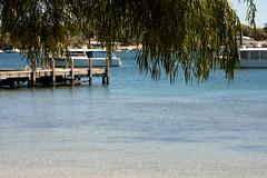 Bicton baths (.Stephen..Brennan.) Tags: bicton da70 pentax pentaxk3 swanriver trees waterscape perth westernaustralia australia au 70mm