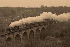 01-03-2019 BR 60163 TORNADO TNT DOR 37669 passes over Durham Viaduct (steveporrett) Tags: 60163 tornado british railways br durham viaduct county wharton park steam 5z65 ferryhill yard carnforth steamtown 37669 a1 pacific