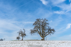 Blue Sky Trees - February 2019 III (boettcher.photography) Tags: tree baum trees bäume schnee snow februar february winter 2019 dilsberg neckargemünd rheinneckarkreis kurpfalz badenwürttemberg deutschland germany sashahasha boettcherphotography boettcherphotos sky himmel wolken clouds natut nature naturfotografie landschaft landscape
