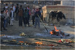 India Travel Photography: Aarti Ceremony, Nada Sadhus & burning Ghats at Varanasi 2019 Benares.041 by Hans Hendriksen (Travel Photography - Reisfotografie) Tags: india travel photography uttar pradesh north noord crowd reisfotografie reisfoto varanasi cremation ghat ghats benares banāras kashi kasi 2019 bad baden bath snan bathing people planet naked naakt naga sadhu saddhu baba nackt hindu hindus hindoe hindoes ganga gangus ganges river rivier march holy heilig sacred ceremony ceremonie religion religie nude dahues babas pelgrims pilgrimage pilgrims bedevaart menigte hindúes sagrado río aarti fire vuurceremonie burning manikarni manikarnika dead reincarnation reincarnatie afterlife