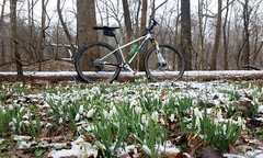 2019 Bike 180: Day 28 - Snowdrops In The Snow (mcfeelion) Tags: cycling bike bicycle crosscountytrail springfieldva winter snowdrops bike180 2019bike180