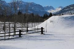 HFF Happy Fence Friday (davebloggs007) Tags: hff happy fence friday alberta canada