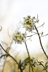 Près d'un champs (Zikindi) Tags: aixenprovence france plante givre glace macro fleur cristaux froid dreams