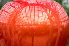 Coming Soon . . . (John Penberthy ARPS) Tags: sculpture glass d750 nikon art reflection greenhouse red glasshouse chihuly kew kewgardens johnpenberthy