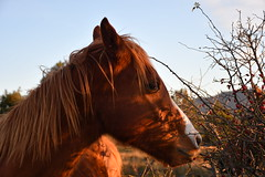 DSC_2555 (griecocathy) Tags: portrait cheval ciel végétations reflet bleu marron rouge blanc beige