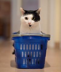 Stöpsel (rengawfalo) Tags: katze tier haustier animal cat pet augen auge eyes kitten stöpsel