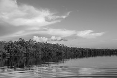 Rio Marié (Johnny Photofucker) Tags: sãogabrieldacachoeira am amazonas amazon amazônia brasil brazil brasile pb bw black white preto branco monochrome nero bianco noiretblanc lightroom paisagem landscape rio riomarié river fiume floresta florestaamazônica rainforest forest foresta jungle giungla selva nuvem clouds nuvole 24105mm