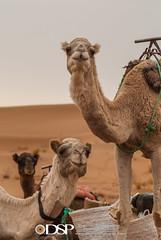Morocco (David Simchock Photography) Tags: 2006 africa davidsimchock davidsimchockphotography dijoncreativesolutions fbfa fbfasub morocco nikon saharadesert vagabondvistas clientequatorialtravel image photo photograph photography travel travelphotography