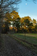 Tagmond (KaAuenwasser) Tags: tagmond waldrand wald mond himmel baum bäume blau grün kiefern baumkronen feld acker februar mittag weg feldweg landschaft sony ilce7rm3
