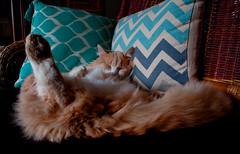 A l'aise... (Evim@ge) Tags: cat chat pet animaldecompagnie fut mignon endormi sleeping quiet calme