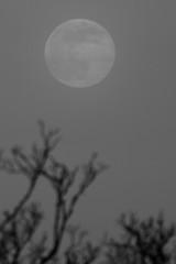 Spring Supermoon,Aberdeen_Mar 19_400 (Alan Longmuir.) Tags: monochrome grampian aberdeen misc sky moon springsupermoon