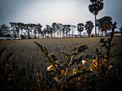 Mobile Shot (fkhan3d) Tags: nature darkgreen green