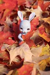 Maple Leaves (AluminumDryad) Tags: cocoriang tobi anthrobjd balljointeddoll doll resin mapleleaves fallfoliage red orange yellow autumn