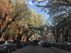 Baltimore MD ~ Spring tunnel (karma (Karen)) Tags: baltimore maryland mtvernon downtown trees blossoms streets cars vanishingpoint hss iphone topf25