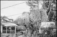 school bus in the neighborhood, trimmed back trees, powerlines, bird feeder, Asheville, NC, Rollei Prego 140, Foma Retropan 320, HC-110 developer, 4.8.19 (steve aimone) Tags: schoolbus neighborhood powerlines trees birdfeeder asheville northcarolina rolleiprego140 fomaretropan320 hc110developer pointandshoot grain grainy 35mm 35mmfilm film blackandwhite monochrome monochromatic