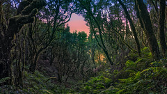 Good Morning Laurisilva (Jörg Bergmann) Tags: islascanarias lumixg20f17 lagomera lorbeerwald panasonic20mmf17 panasonicdmcgf7 pancake parquenacionaldegarajonay backlight canarias canaryislands early españa forest garajonay gf7 gomera green greenery hiking laurisilva lumix lumix20mm m43 mft micro43 microfourthirds morning nationalpark nature panasonic spain stitched sunrise travel trees wallpaper μ43 rasodelabruma winter invierno hiver 2019 january