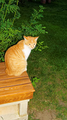 2015-06-09_20-18-22_ILCE-6000_7137_DxO (Miguel Discart (Photos Vrac)) Tags: 2015 33mm animal animalphotography animals animalsupclose animaux aube cat cats chat chats couchedesoleil createdbydxo crepuscule dawn dusk dxo e18200mmf3563 editedphoto focallength33mm focallengthin35mmformat33mm hotel ilce6000 iso1000 levedesoleil longexposure nature naturephotography night noche nuit pet soleil sony sonyilce6000 sonyilce6000e18200mmf3563 sunrise sunset turquie twilight vacance
