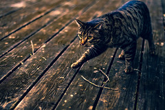 Cat (inilidg) Tags: cats cat editing pets nature catlife pet animals love animal cute dogs instagood kitten kitty instacat catlover petstagram photooftheday kittens catoftheday photography meow catsagram animallovers lovecats lens camera dslr animalphotography