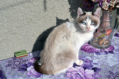 Cat (walmarc04) Tags: cat animal photography eyes pisica