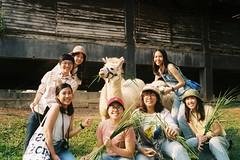 Khaoyai, exclusivity (kriksome) Tags: film camera canon cano canonet fujic100 khaoyai korat thailand natural cafe primopiazza sunray silhouette alpaca sheep farm
