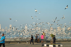 Mumbai (Robert Borden) Tags: street birds gulls seagulls people mumbai bombay ocean india maharashtra asia fuji fujifilmxt2 fujiphotography travel world 50mm 50mmlens 50mmprime primelens 50mmphotography