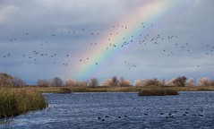 Rainbow over a Refuge. (Lisa Roeder) Tags: wildlife landscape birds refuge rainbow