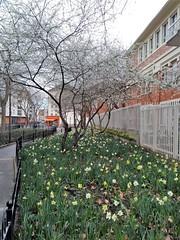 LE PRINTEMPS ARRIVE (marsupilami92) Tags: frankreich france îledefrance hautsdeseine 92 clichy fleur arbre