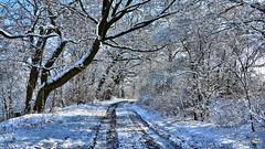 Winter shadow (Szymon Karkowski) Tags: outdoor winter snow road tree trees bushes branches nature shadow silesian voivodeship gliwice nikon d7100