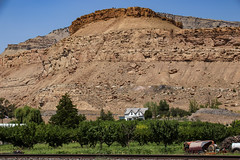 Orchards in the Desert - Palisade, Colorado (BeerAndLoathing) Tags: 2018 pallisade usa palisade roadtrip desert color 77d summer colorado trip contrast canon orchard august pallisadetrip canoneos77d