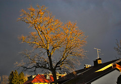 A moment of dramatic lighting (echumachenco) Tags: tree light dark shadow sky overcast cloud grey house building roof freilassing berchtesgadenerland bavaria bayern germany deutschland nikond3100 outdoor march evening sunset