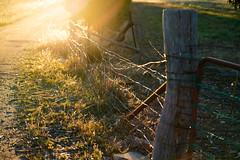 DSC07485 (ThyNameIsBlair) Tags: australia outback bendigo farmlife オーストラリア アウトバック ベンディゴ 牧場ライフ