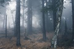 Nebelandschaft Wald (Gruenewiese86) Tags: 2018 harz hütte november sony a6500 wald forest forestscape fog nebel angst tod tot geheimnisvoll mystisch mystical germany holz baum himmel landstrase