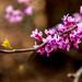 Spring 2019 Blooms (4)