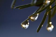 (Drops 03) (Marc Pagès) Tags: tamron90mm d7200 nikon aigua agua water oxido oxid metal metall ferro barana hierro gota drop fulla hoja leaf sol sun