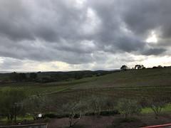 Artesa Vineyards & Winery - Napa County, California, USA - February 4, 2019 (mango verde) Tags: wine grapes vineyard winery artesavineyardswinery napacounty california usa mangoverde
