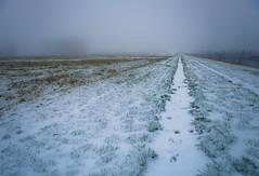 Walking home for christmas (Ingeborg Ruyken) Tags: shertogenbosch autumn mist fall flickr snow ochtend 500pxs empel sneeuw empelsedijk morning natuurfotografie herfst koornwaard instagram fog