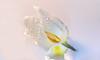 baby tulip in aloe vera (norbert.wegner) Tags: nature flower petal plant flowerhead closeup singleflower beautyinnature blossom freshness macro lily white springtime leaf summer pinkcolor water botany waterlily tulip whiteonwhite macromondays
