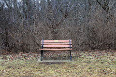 Come Sit With Me (nicolemonsees) Tags: woods bench trees path nature outside outdoors grass winter season