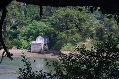 3KB07279a_C (Kernowfile) Tags: pentax cornwall cornish water creek boathouse grass tree trees bush bushes green stjustinroseland roselandpeninsula