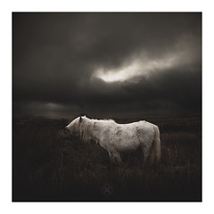 Exasperation (picturedevon.co.uk) Tags: fogintor dartmoor nationalpark devon horse pony wildlife animal weather winter sky outdoors white color light dark outside nature clouds landscape canon wwwpicturedevoncouk