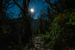 Wolf Moon (free3yourmind) Tags: wolf moon full footpath forest trees night blue sky moonlight mirveti georgia scenic nature