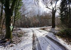 WALK WITH WINTER SUN (Fimeli) Tags: nature natur winter wintertime winterzeit winterlicht sun wald forest weg schnee snow tree baum