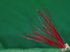 Just a flower (lrodigu) Tags: lookingcloseonfriday minimalismo minimalism