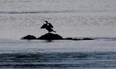 2019_01_05_9999_4 (Talisman Pickering) Tags: bird branch water beach