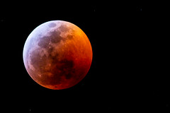 Lunar Eclipse January 21, 2019 (hetrickwesley) Tags: 2019 80d canon eclipse florida gainesville january lunareclipse moon night sigma150600comntemporary sigmalens supermoon