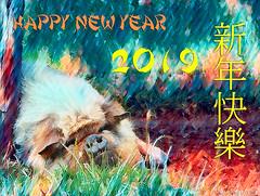 The Year of the Pig - 5 Feb 2019 (Lemon~art) Tags: happypig happynewyear chinesenewyear 5february2019 pig manipulation text topaz ps springfestival lunarnewyear animal farm farmanimal