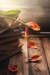 """Everything has it's end"" (mariajoseuriospastor) Tags: stilllife tulips desojar end decadencia"